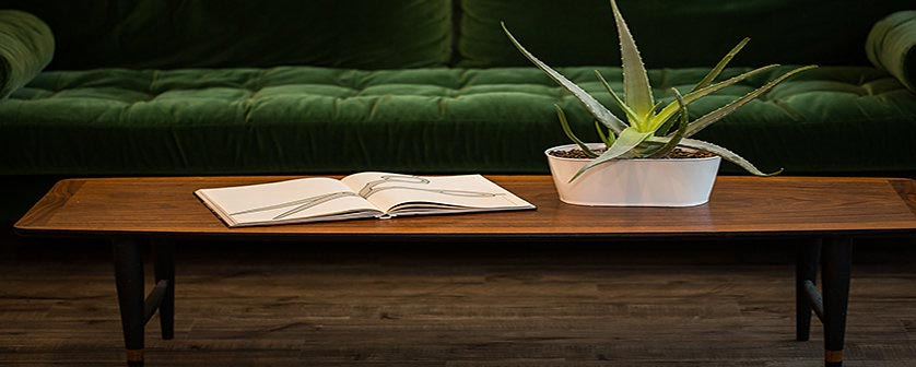salon-table-with-aloe-plant-838